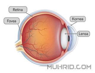 Kenapa Kita Dapat Melihat Lebih Jelas Setelah Menyipitkan Mata?