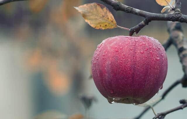 Ini 5 Manfaat Buah Apel untuk Kecantikan Kulit dan Wajah