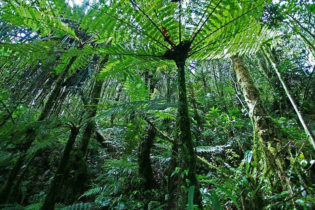 Hutan Hujan Papua